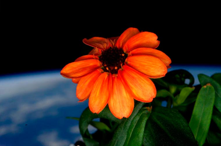 The first flower to bloom in space!