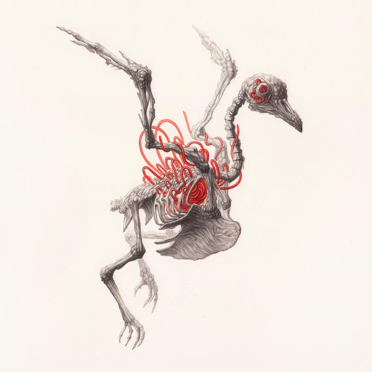 Skulls - The strange world of Nick Sheehy