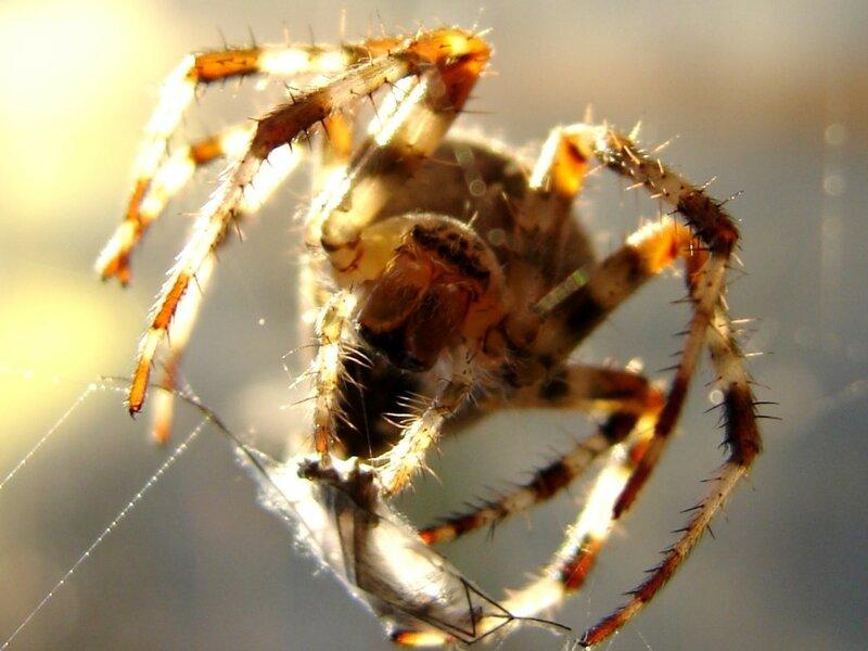 У паука 003 ... фотограф Александр Улисский