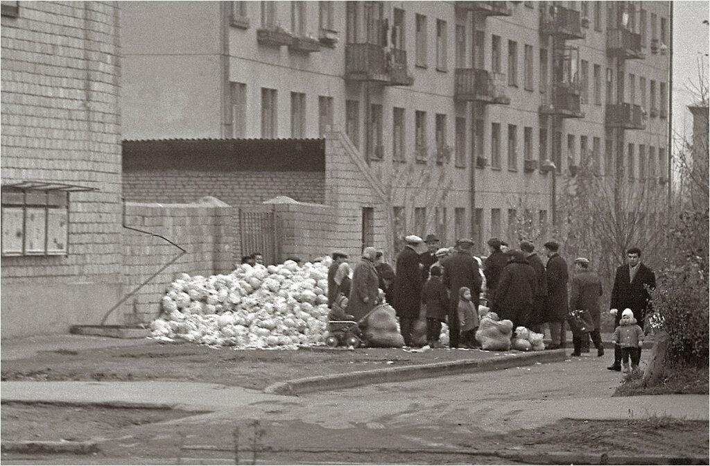 Москва, Измайлово, Сиреневый бульвар, Торговля капустой.  1967.jpg