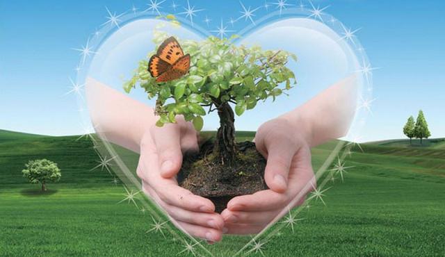 Денежное дерево секреты фэншуя
