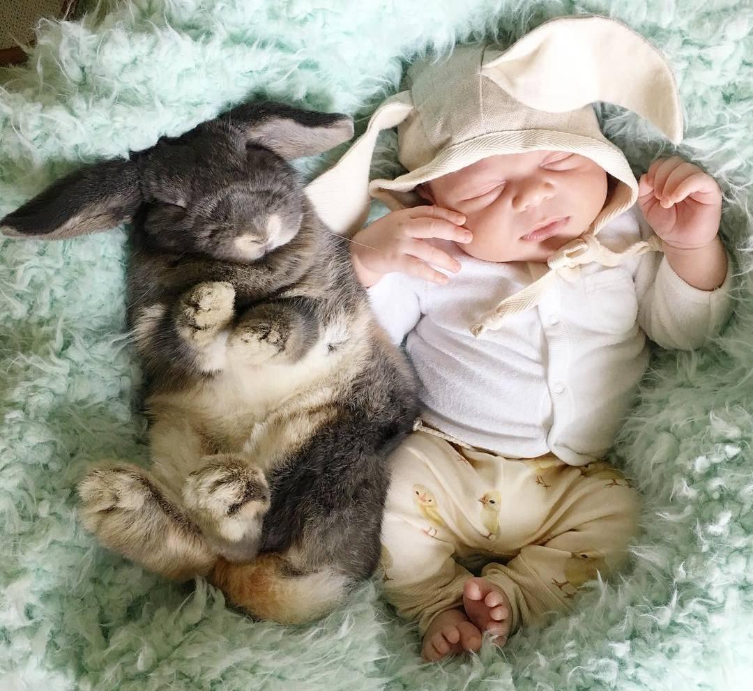 Малыш и кролики