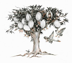 Берникловое дерево.jpg