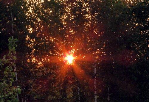 Заблудилось солнце в берёзках.