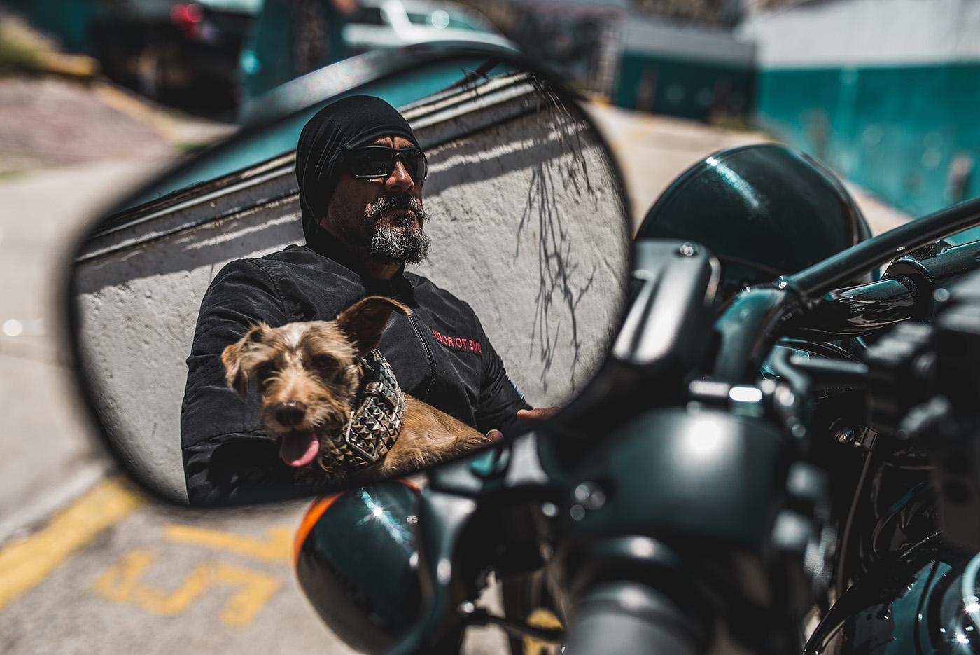 Собаки - Creando conciencia / GUSTAVO TREJO