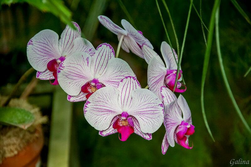 Цветы как бабочки
