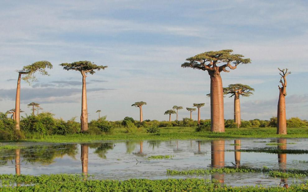 33. Остров входит в состав государства Йемен и расположен на расстоянии 250 км от Африки и 350
