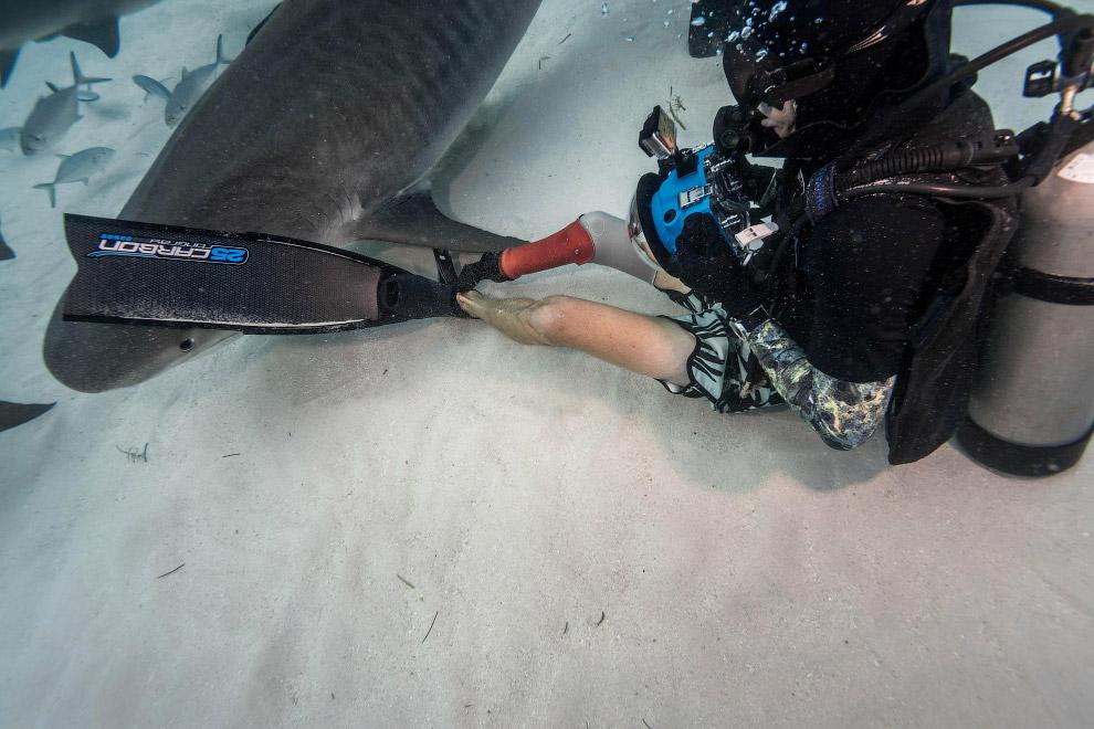 11. Зубы большинства акул имеют форму острых конусов и сидят на хрящах верхней и нижней челюсте
