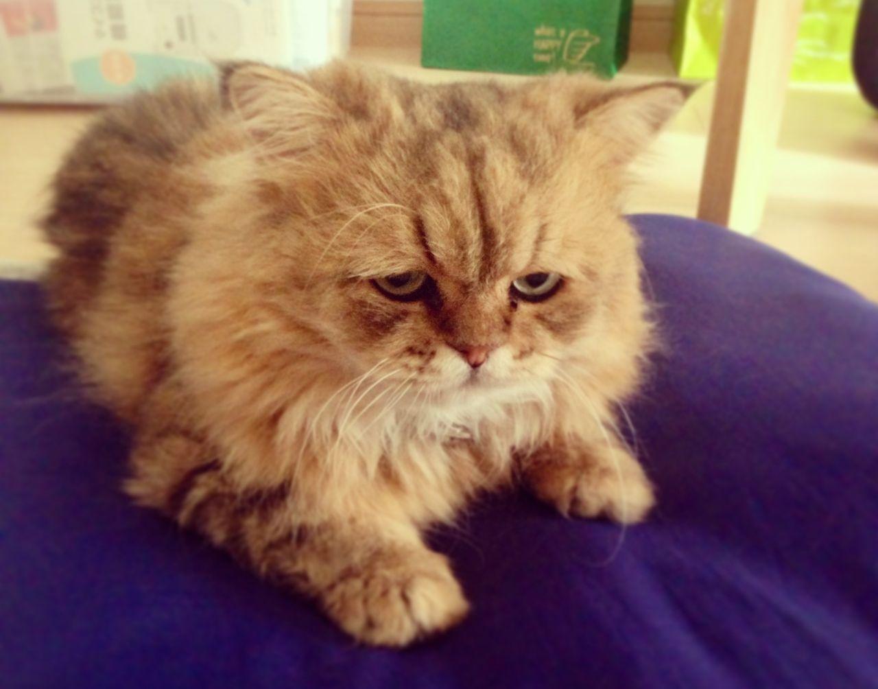 Мониторинг состояния здоровья кота. Датчик проверяет кошачью температуру (без использования ректальн