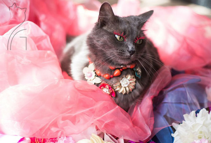 Гламур как стиль жизни: кошка в ярких нарядах завоевывает инстаграм (13 фото)