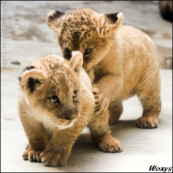 Фотографии животных Woxys