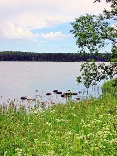 Летним днём у озера