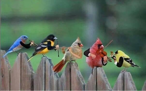 машины утренние голоса птиц ивсей природы кусочек Девочки наслаждением