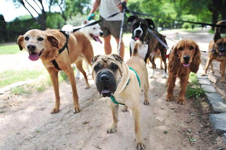 Handicapping-The Business of Dog Walking