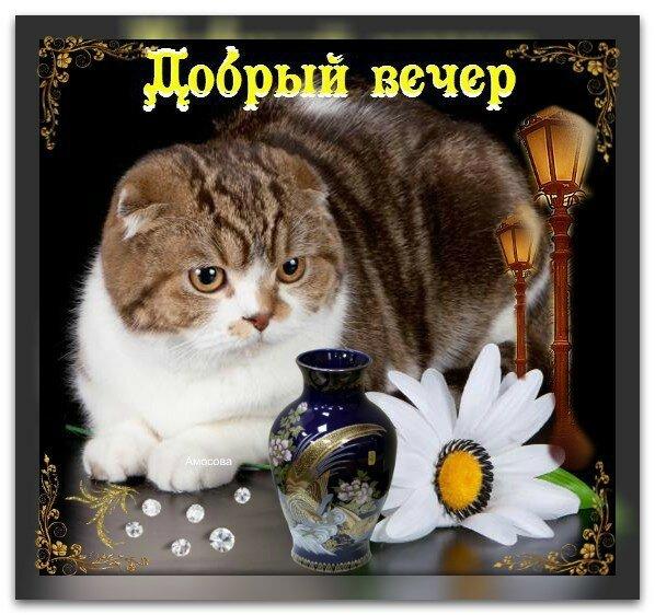 Красивые открытки с добрым вечером с котиками живые, свадебная