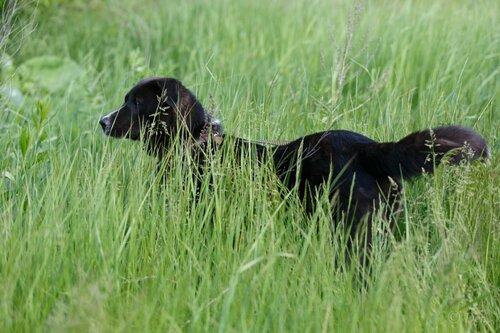 Круз собака из приюта догпорт фото
