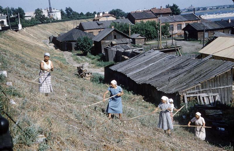 Крупнее Такими были Коровники полвека назад, 1958: