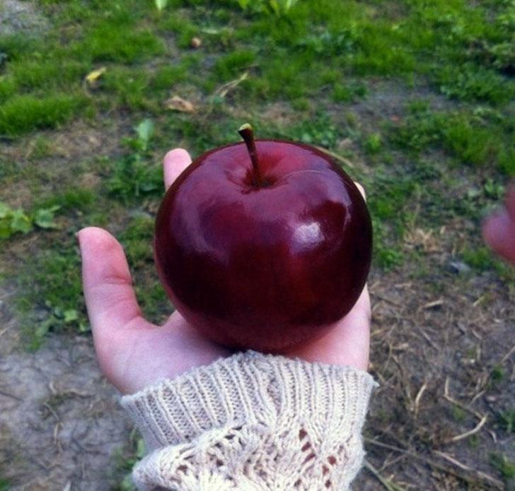 Яблоко как будто из сказки про Белоснежку. Такое идеальное и аппетитное, что где-то должен быть подв