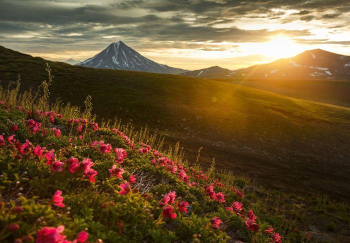 Наиболее теплые южные склоны сопок в середине лета покрываются ярким цветочным ковром.