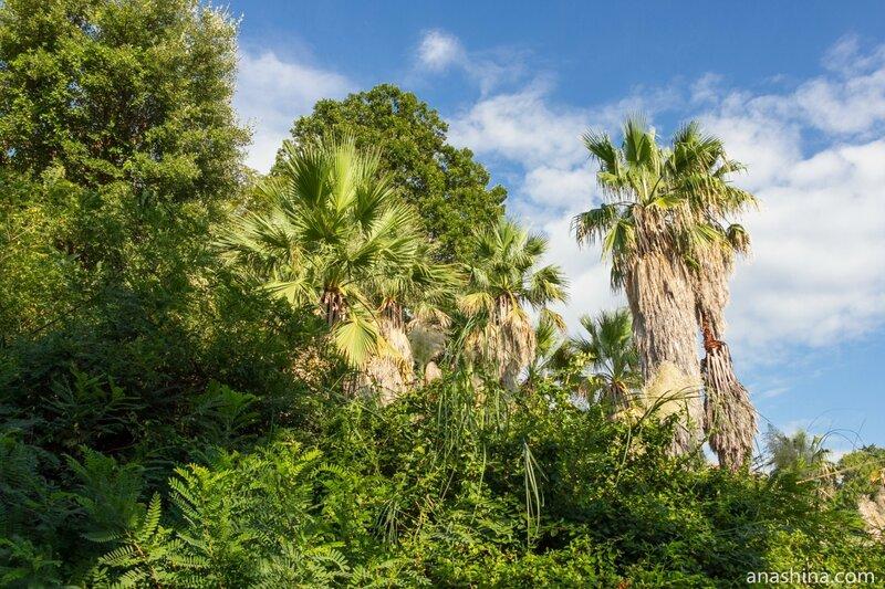 Пальмы, Сочинский дендрарий