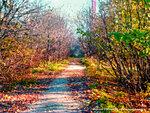 Осенний Солнцевский пейзаж