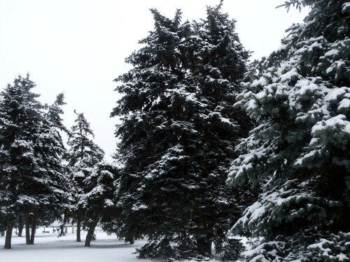 Зимы ждала природа,снег выпал только в январе...