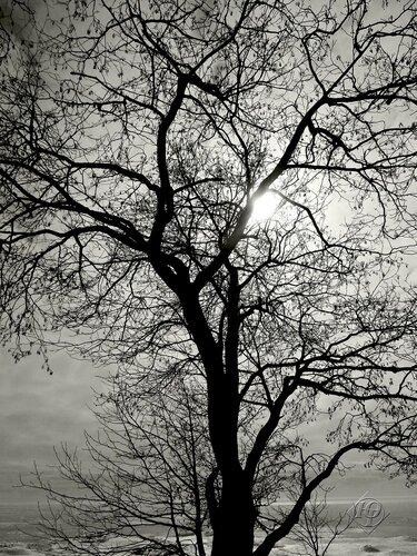 Узор дерева