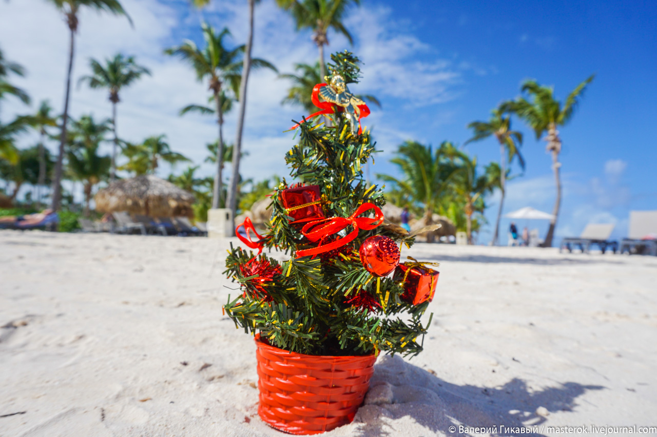 Рождество в Доминикане Доминикане, Рождество, местные, здесь, чтобы, имеет, праздник, является, могут, жители, устраиваются, рождество, необычно, весьма, Рождества, декабря, значение, доминиканцев, местечке, обходится