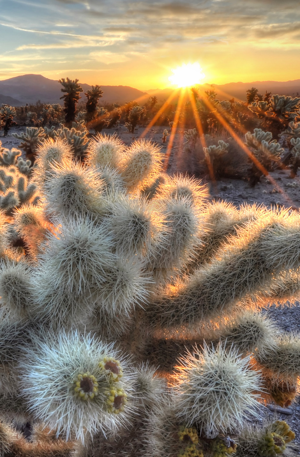 19. Живописный ландшафт в Калифорнии. (Фото Jarrod Castaing).  Также смотрите « Природные запов