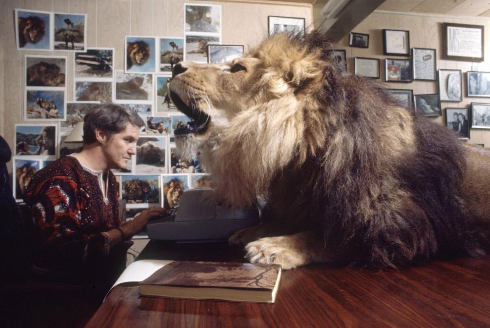 В фильме «Рев» было задействовано 150 хищных кошек. Во время съёмок сцены с нападением львицы Мелани