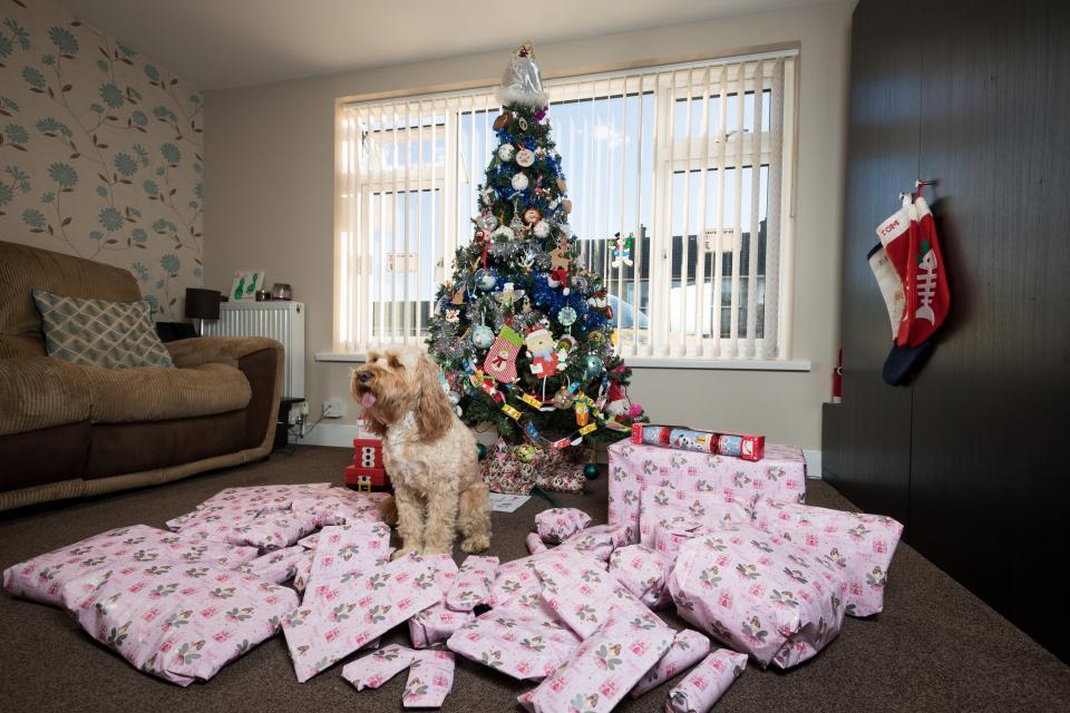 «Я люблю Лолу больше, чем сына»: британка купила собаке 68 подарков на тысячу фунтов (9 фото)