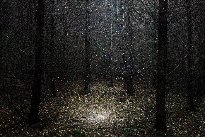 Мистические лесные пейзажи (9 фото)