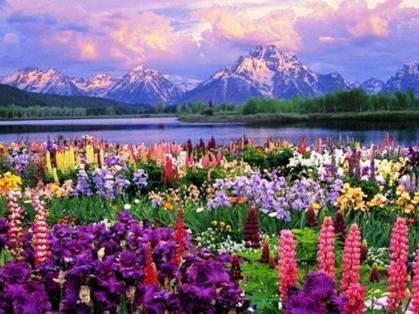 Долина цветов в Гималаях на высоте 5 тысяч метров