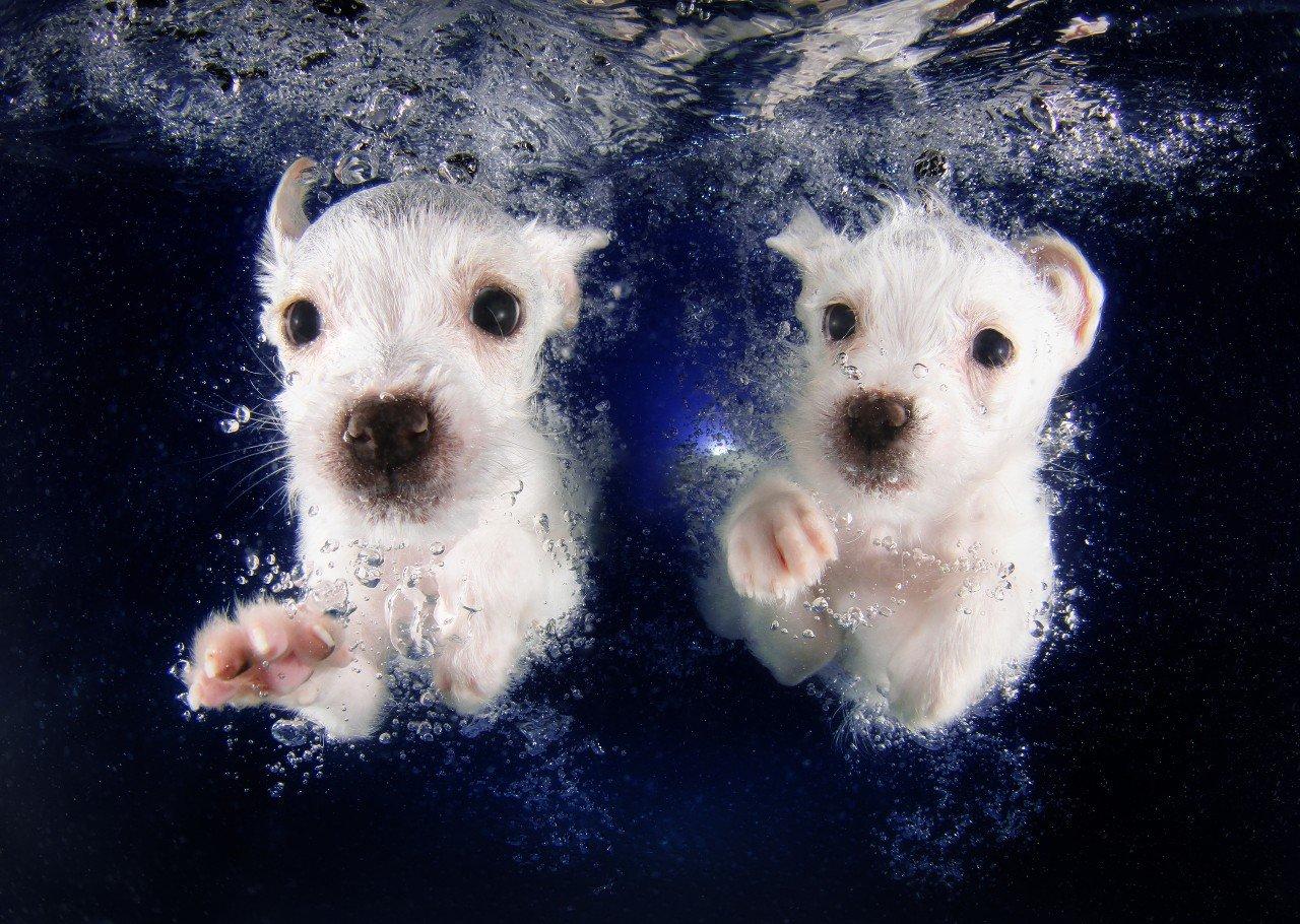 животные Фотография фотограф подводный проект проекты щенки подводная