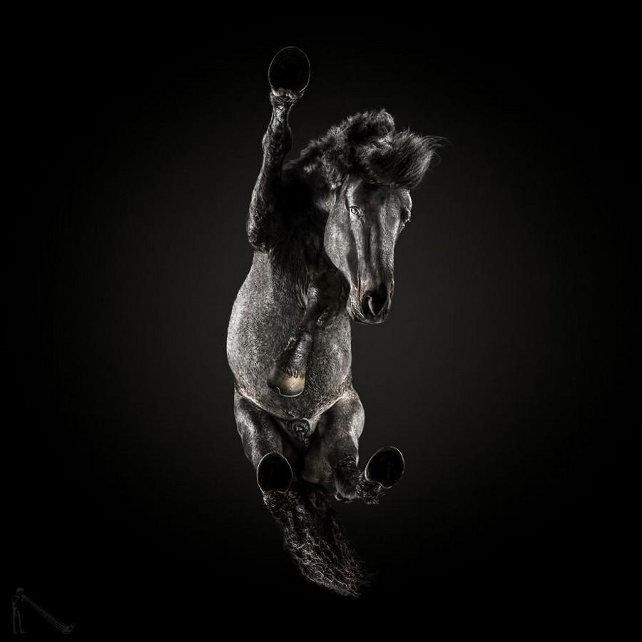 Под конём – самая сложная фотосессия Андриуса Бурбы