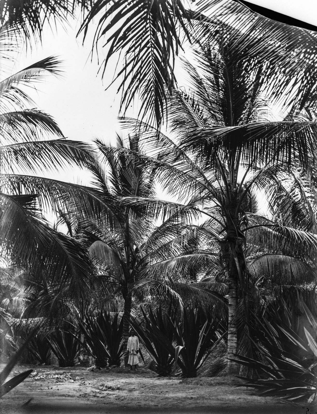 17. Танга. Агава и кокосовые пальмы