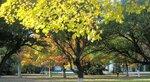 Лимонная осень.