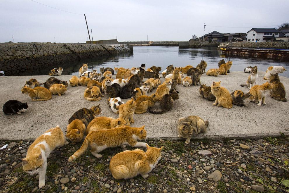 21. Редкий снимок: в кадре один кот. (Фото Thomas Peter | Reuters):