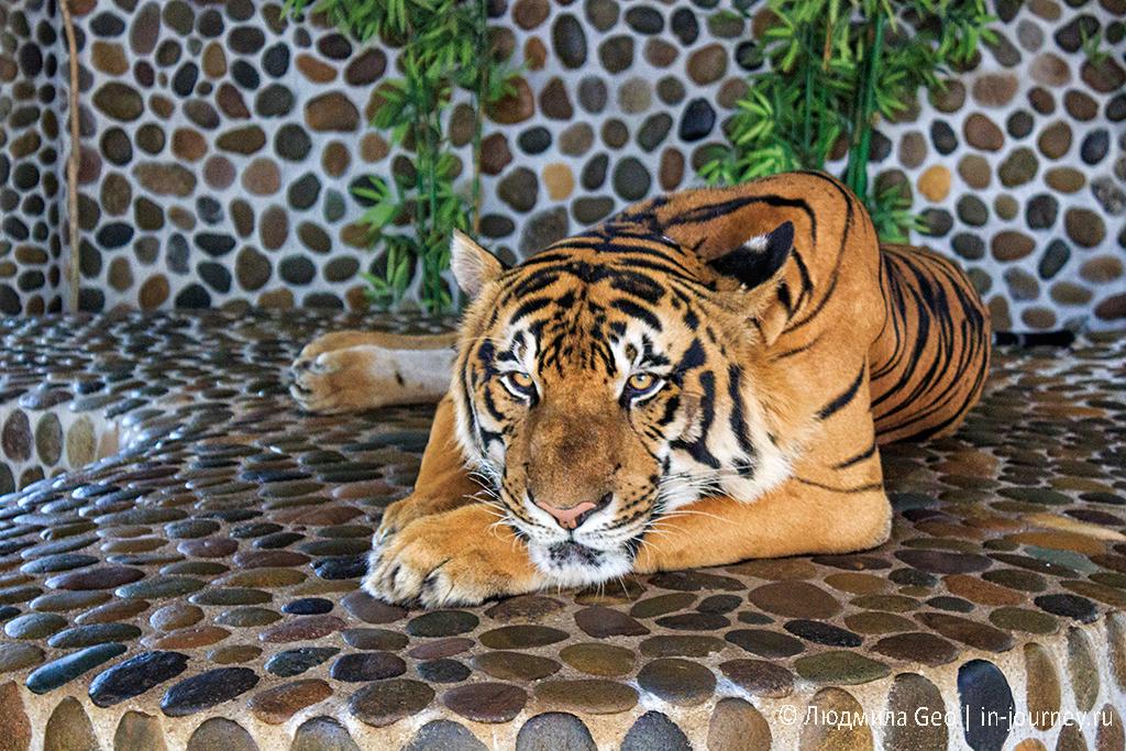 тигр в парке древних камней