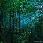Чоботовский лес Подписывайтесь https://www.instagram.com/p/BWeibeBlGXv/Фото Кристина Чувилькина #solntsevo #солнцево #солнцевский #чоботы #новопеределкино