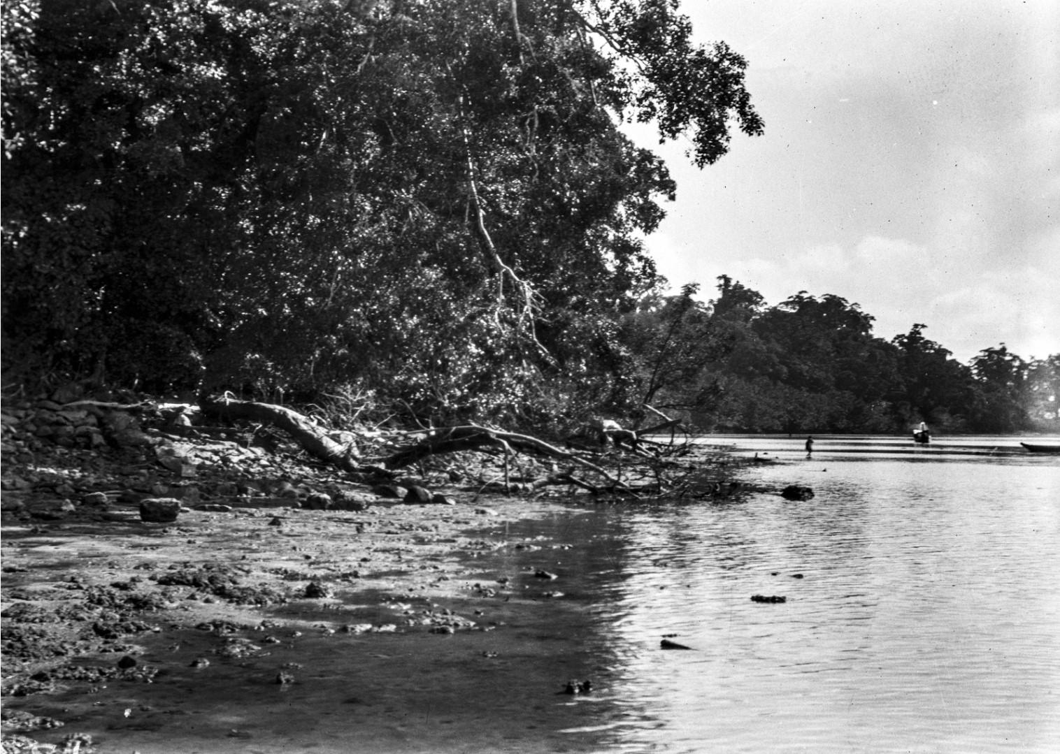 1255. Вид прибрежного ландшафта острова Лонг