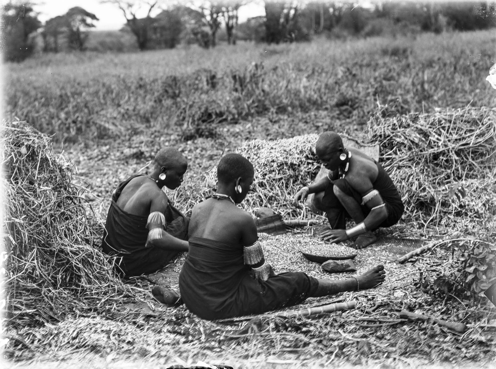 149. Три женщины паре просеивают горох