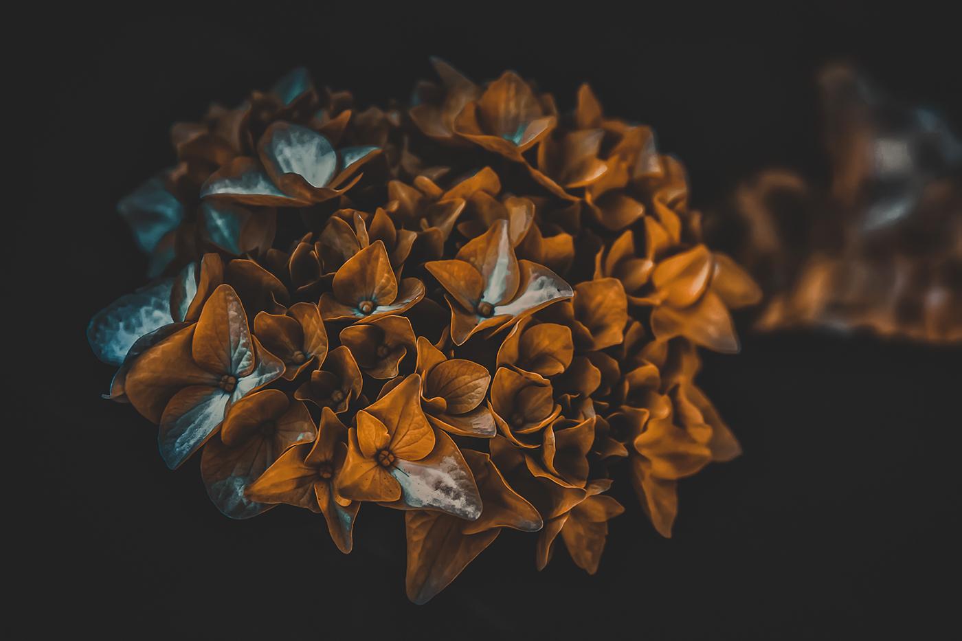 Осень / фото Алексей Чмихалов