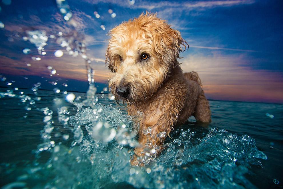 8. Победитель в категории «Пожилые собаки». (Фото John Liot):