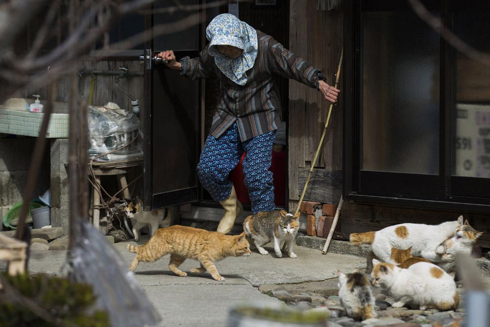 4. Этих кошек когда-то специально завезли на остров для того, чтобы они ловили мышей, которые