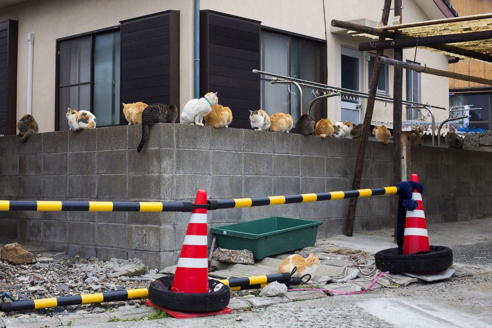 18. Остров кошек Аошима, 25 февраля 2015. (Фото Thomas Peter | Reuters):