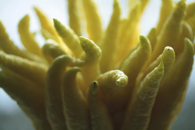 Кажется, что эти фрукты так ихотят схватить вас. Хотя это обычные цитроны, из-за генетических особе
