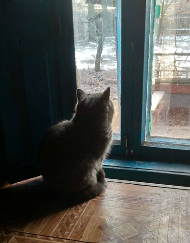 Бетси у окна