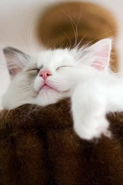 кошки-кошки-10.jpg