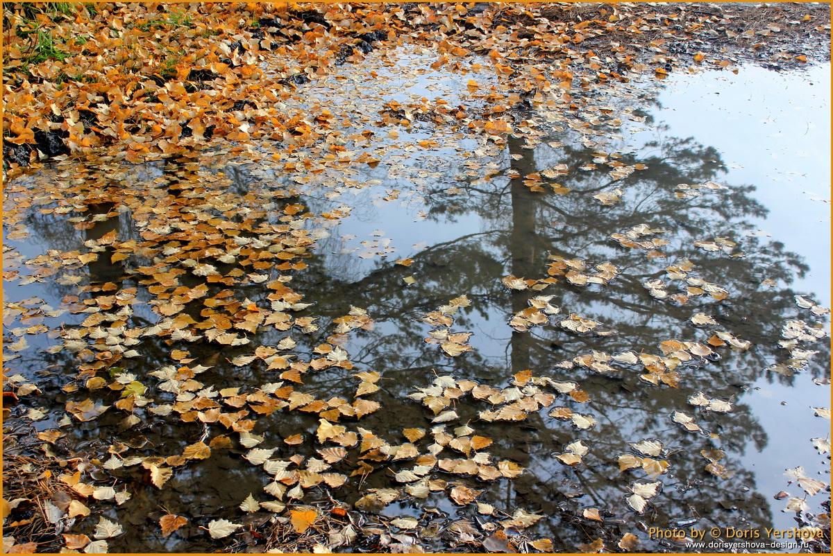 Осенние листья. Фото - Дорис Ершова